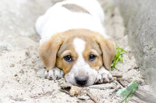 개를 사람처럼 대하면 안 되는 이유는 무엇일까?