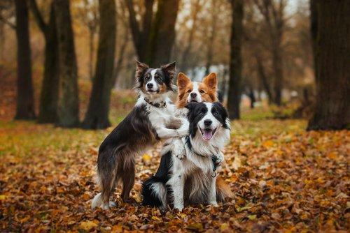 개는 주인과 가족들을 정말 알아볼까?