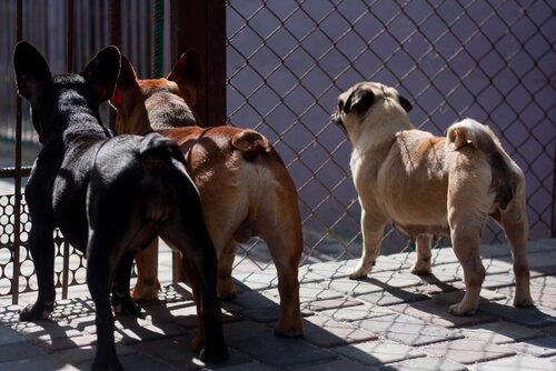 대만에서 식용 개고기와 고양이 고기가 금지되다