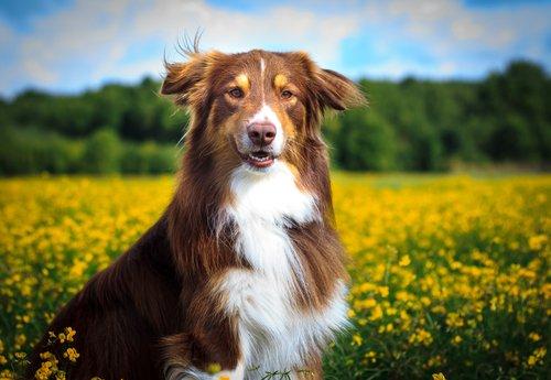 개에게 해가 되는 식물