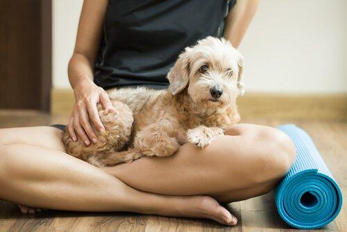 요가에 지친 개 개를 위한 휴식 기술