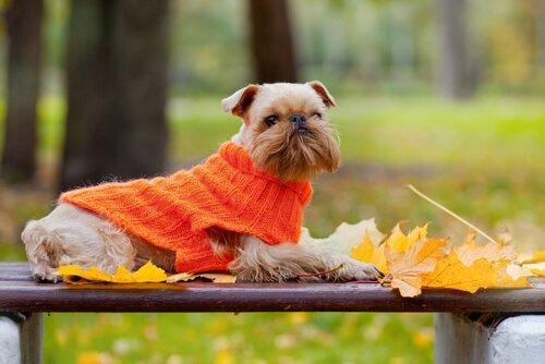 개도 추위를 탈까?