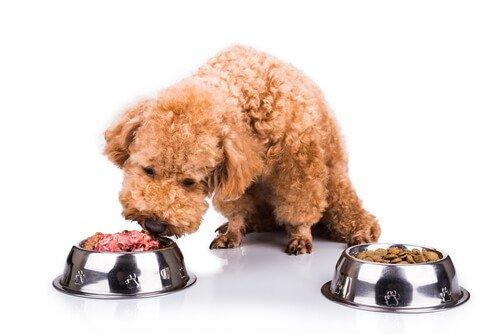 반려동물에게 자연식을 먹이는 방법