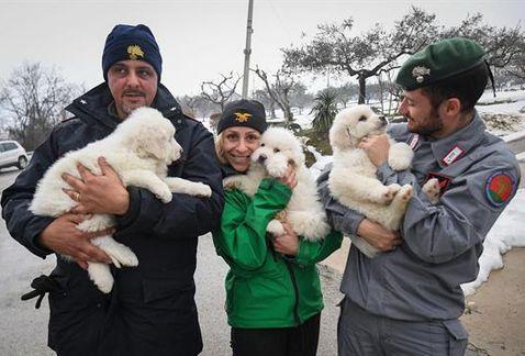 눈사태로 무너진 호텔에서 살아남은 강아지 세 마리