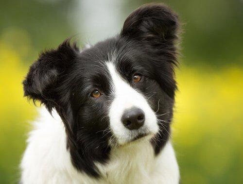 개는 당신이 하는 모든 일을 기억한다!