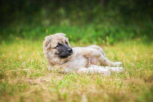 개가 흙에서 뒹구는 것을 좋아하는 이유