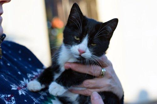 고양이가 주인과 의사소통하는 방법에 관한 연구