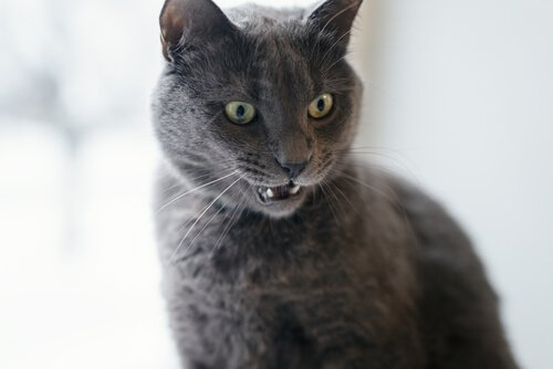 고양이가 주인과 의사소통을 하는 방법에 관한 연구