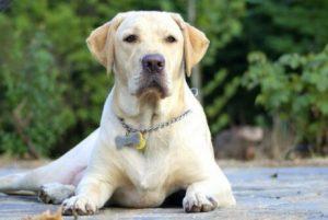 개에 관해 몰랐던 21가지 충격적인 사실
