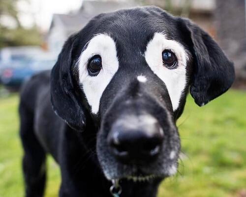 백반증에 대한 인식을 높이는 개, 로우디를 만나보자