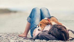스트레스를 피하라 개가 암에 걸리지 않도록 예방할 수 있을까?