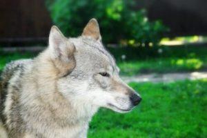 개에 관해 몰랐던 21가지 충격적인 사실 – 2부