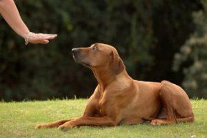 아기가 태어날 예정이라면 개를 훈련하고 준비시키자