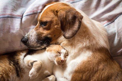 반려동물의 설사에 대처하는 방법