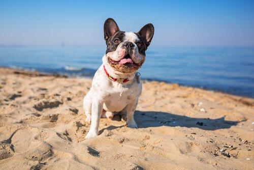 개가 바닷물을 가까이해도 괜찮을까?