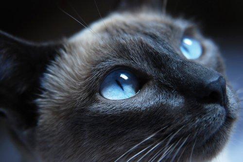 고양이가 짓는 표정 6가지와 의미