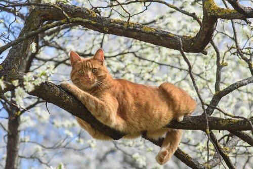 고양이의 평균 수명은 얼마나 길까?