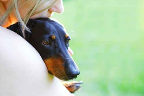 개는 나의 가장 좋은 친구