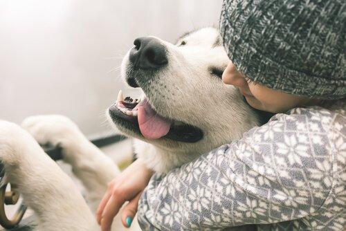 개에게 감정이 있을까?