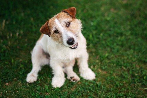 개는 주인을 어떻게 이해할까?