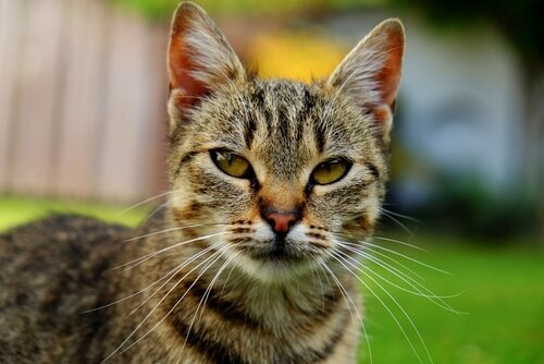 고양이 나이를 사람으로 치면 몇 살일까?
