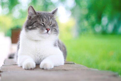 고양이를 행복하게 만드는 5가지