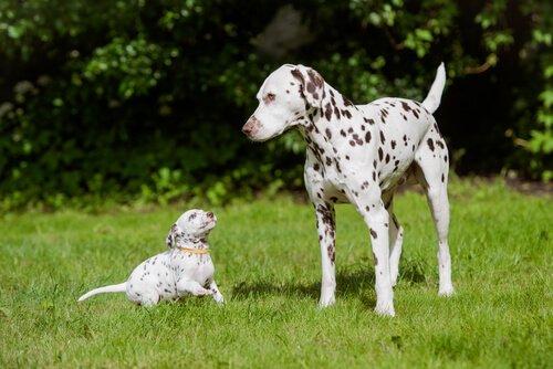 지구상에서 가장 아름다운 개 품종