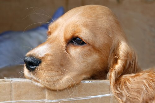 개가 시간을 알 수 있을까? 코를 통해서 안다!