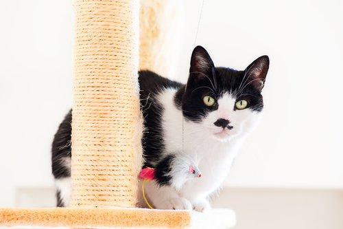 고양이가 집 안의 가구를 긁지 않게 하는 방법