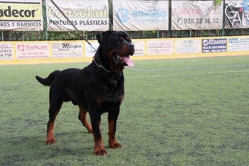 지배적인 성격이 강한 개를 훈련시키는 방법