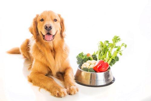 개가 먹어도 되는 채소와 안 되는 채소