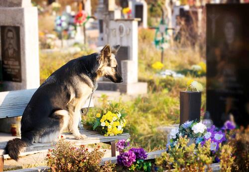 개는 얼마나 오래 사람을 기억할 수 있을까?