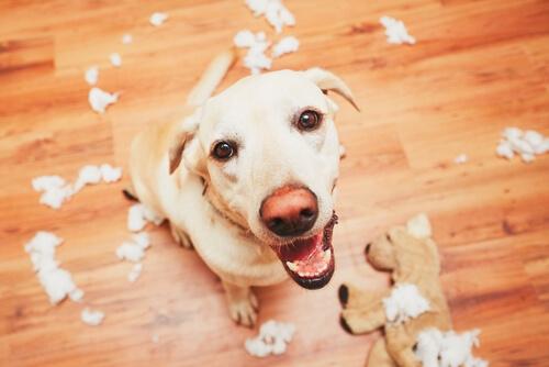 얼마나 오래 개는 사람을 기억할 수 있을까?