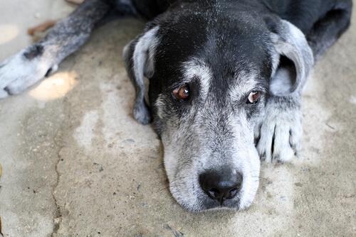 개는 얼마나 오래 살까?