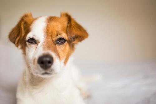 개가 질투를 느낄까?