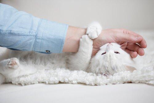 고양이가 무는 이유: 왜 고양이는 만지려고만 하면 물까?