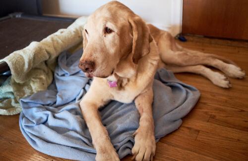 개는 얼마나 오래 살까? 장수견
