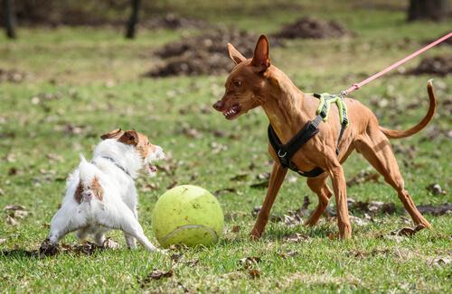 주인의 행동에 따라 개가 폭력성을 보일 수 있다