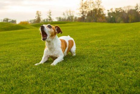 개가 짖는 소리의 유형과 그 의미