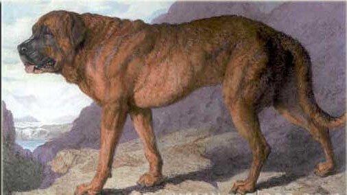 지금까지 멸종된 개는 어떤 품종들일까?