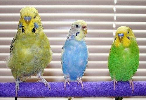 앵무새 질병에 관한 정보