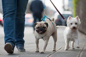 개에게 유황은 해결책일까, 잠재적으로 해로울까?