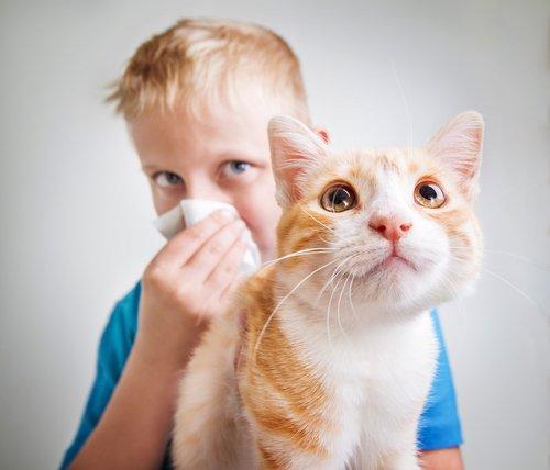 고양이 알레르기: 원인, 증상 및 예방