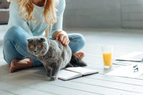 고양이와 성공적인 동거를 위한 규칙 6가지