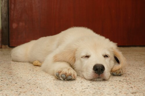 개는 어떤 꿈을 꿀까? 개를 깨워야 할까?