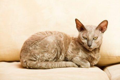 오래된 고양이