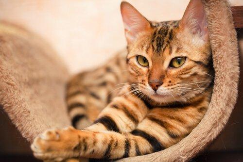 고양이와 동거를 위한 규칙 6가지