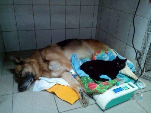다른 동물 환자를 돌보는 마비된 고양이, 루시퍼