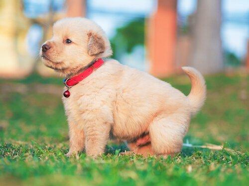 개 디스템퍼는 개에게 치명적인 질병이다
