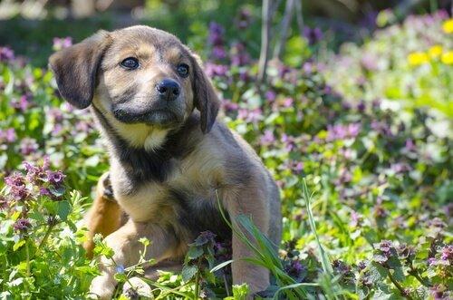 개에게 발생하는 진드기성 피부병: 흡윤개선은 무엇인가?